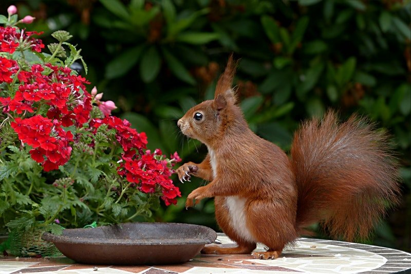 How to Deter Squirrels From Ruining Your Yard